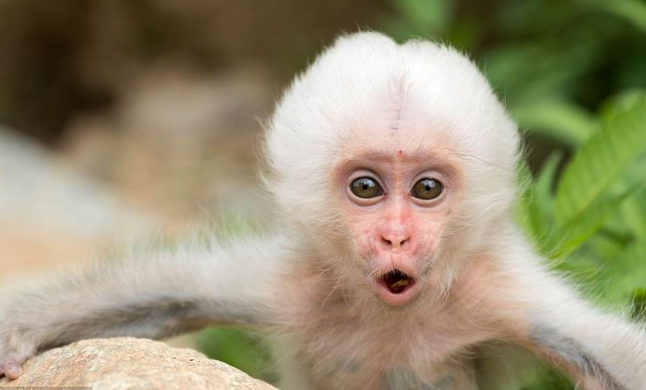 Monkeys as a Pet – Why Not!