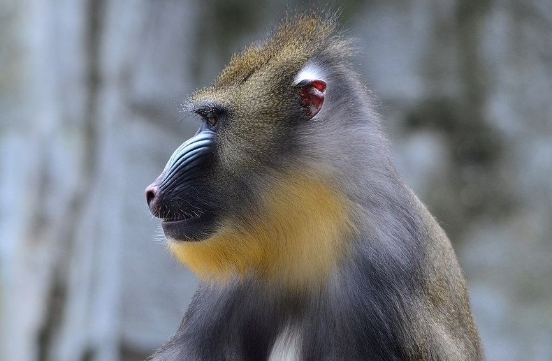 Let's Introduce to Monkeys: 4 Things of Monkey Habitats