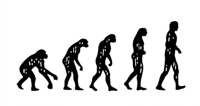Scientist Put Human Brain into Monkeys to Deny Darwin'sa Evolution Theory